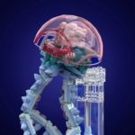LEGO Ideas Marine Life (8)